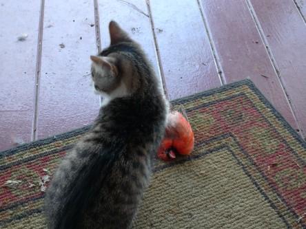 importance of curiosity